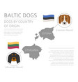 dogs by country of origin baltic dog breeds vector image vector image