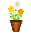 Flowers in a pot vector image vector image