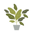 house plant in pot decorative icon vector image vector image