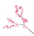 realistic sakura tree with pink petal vector image