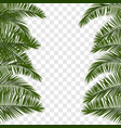 summer green palm leaf transparent vector image