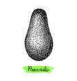 ink sketch avocado vector image
