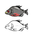 piranha fish isolated on white background vector image