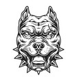pitbull head in black and white color style vector image vector image