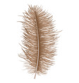 brown feather icon realistic style vector image