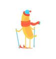cute banana wearing scarf and hat skiing cartoon vector image vector image