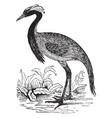 demoiselle crane vintage vector image vector image