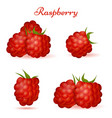 forest raspberry with leaves icons vector image
