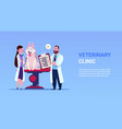 veterinarians examine dog in veterinary clinic vector image