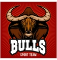Bulls Mascot vector image