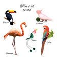 colorful exotic fauna concept vector image vector image