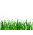 bright and juicy green grass on a white background vector image vector image