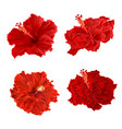 Red hibiscus corrugated tropical plant vintage