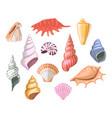 shells of sea seashell and marine snail scallops vector image