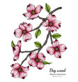pink dogwood flower and leaf drawing with line vector image