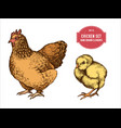 collection of hand drawn colored chicken vector image