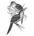 curl crested aracari vintage vector image vector image