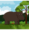 hippo safari animal vector image