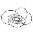 kiwi fruit contours vector image vector image