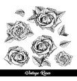 roses hand drawn sketch set vector image