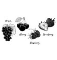 set of fruits and berries isolated on white vector image vector image