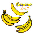 bananas fruit set hand drawn vector image vector image