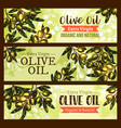 olive oil product olives sketch banners vector image vector image
