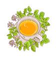 oregano tea vector image vector image
