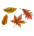set of colorful autumn leaves and berries vector image vector image