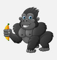 cartoon funny gorilla holding banana vector image