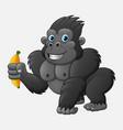 cartoon funny gorilla holding banana vector image vector image
