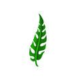 long split-leaf of tropical plant natural green vector image vector image