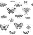 sketch of a butterfly vector image