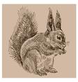 Vintage squirrel vector image vector image