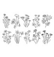wild flowers sketch wildflowers and herbs nature vector image vector image