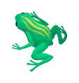 bright green frog with yellow stripes on back vector image vector image