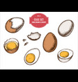 collection of hand drawn colored eggs vector image