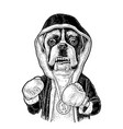 dog boxer dressed in human in robe gloves vector image vector image
