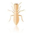 flat geometric termite vector image vector image