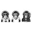 monkey hipster with dreadlocks in headphones vector image vector image