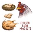 Set of chicken farm products vector image vector image
