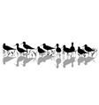 stilt waders in marsh silhouette vector image vector image