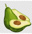 Avocado isolated organic food farm food vector image vector image
