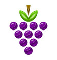 bunch of grapes fruit food healthy snack vector image vector image