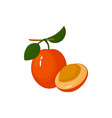 cartoon fresh ximenia fruit isolated on white vector image vector image