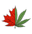 colored vintage maple with marijuana leaf drawing vector image