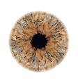 Eye iris vector image vector image
