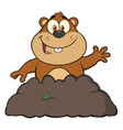 happy marmot cartoon character waving vector image
