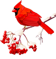 Red Cardinal bird vector image