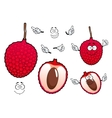 Bright red exotic lychee fruit vector image vector image